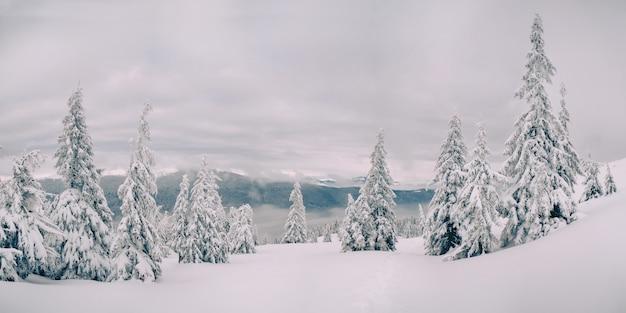 Magische sparren vallende sneeuw in de bergen