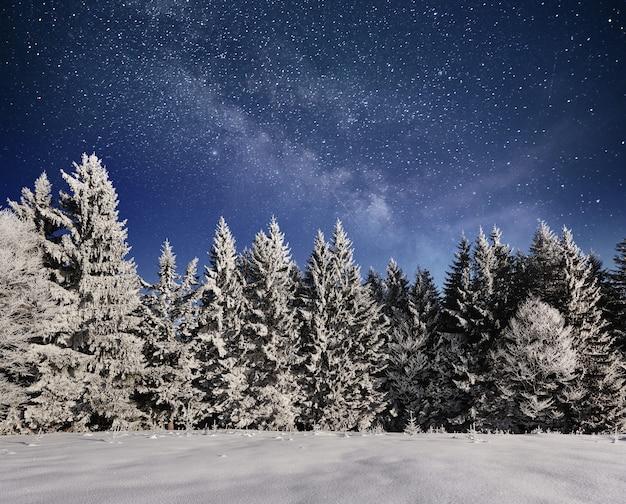 Magische winter besneeuwde boom. winterlandschap. levendige nachtelijke hemel met sterren en nevel en galaxy. diepe lucht astrofoto