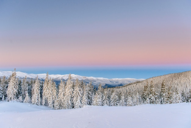Magische winter besneeuwde boom