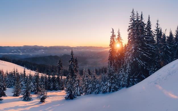Magische winter bos vallende sneeuw bij zonsondergang