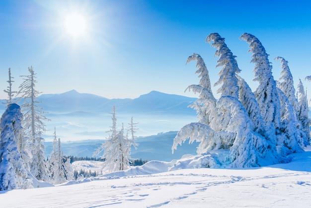 Magische winter sneeuw bedekte boom