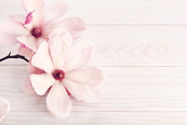 Magnoliabloem op witte houten achtergrond. kopieer ruimte