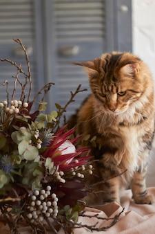 Maine coon-kat bekijkt exotisch boeket op lijst met beige linnentafelkleed, huiselijkheidsconcept