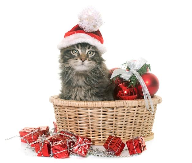 Maine coon kitten en kerstmis