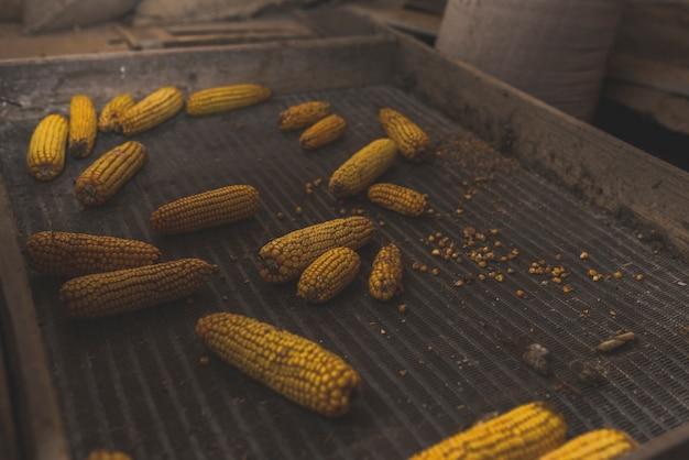 Maïs geplaatst in metalen doos