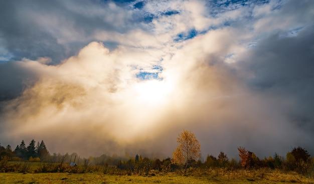 Majestueuze alleen beuk op een heuvelhelling met zonnige balken in bergdal Premium Foto