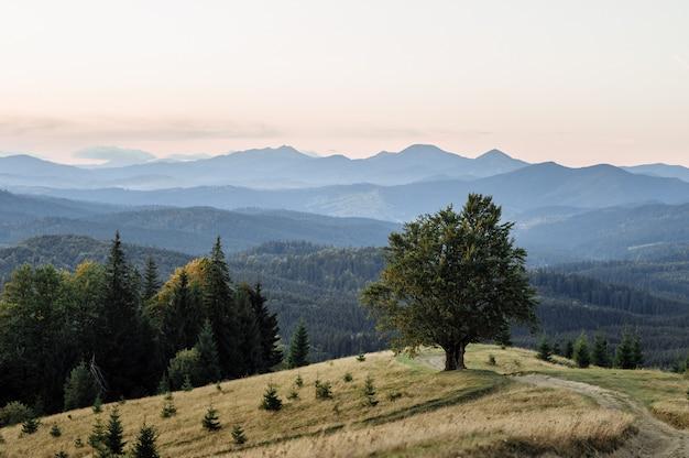 Majestueuze alleen beuken boom op een heuvel helling met zonnige balken op bergdal. dramatische kleurrijke ochtendscène. rode en gele herfstbladeren. karpaten, oekraïne, europa. schoonheid wereld.