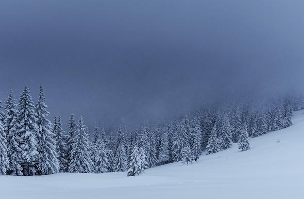 Majestueuze winterlandschap, dennenbos met bomen bedekt met sneeuw. een dramatische scène met lage zwarte wolken, een kalmte voor de storm