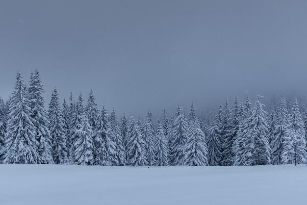 Majestueuze winterlandschap, dennenbos met bomen bedekt met sneeuw.