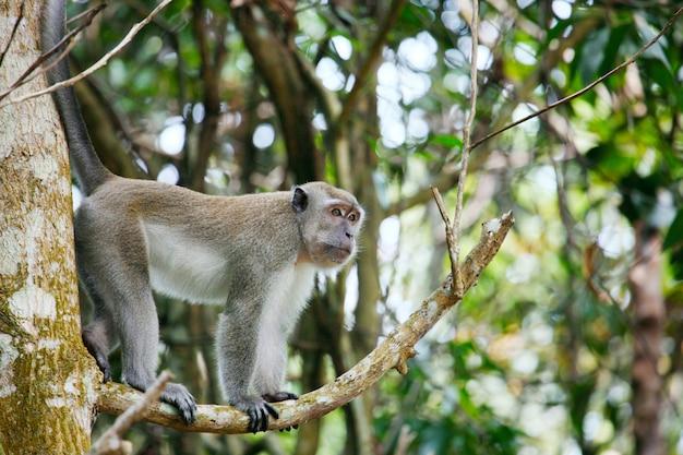 Makaak in een boom