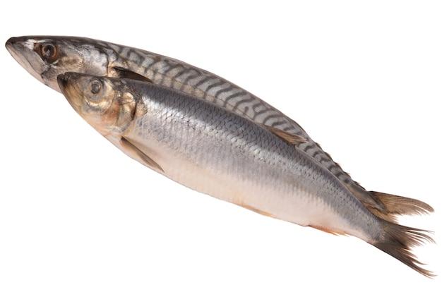 Makreel en haring geïsoleerd op wit