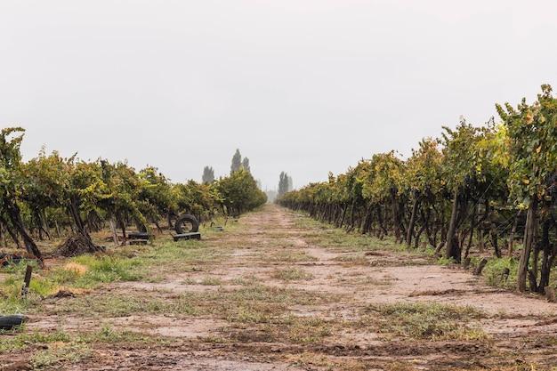 Malbec druivenplantage in de stad mendoza, argentinië.