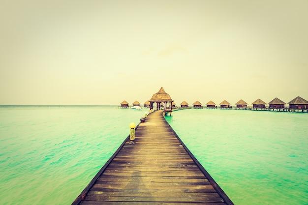 Maldiven groene zomer achtergrond boom
