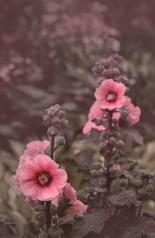 Malve bloemen op een pastel achtergrond. voor je mobiele telefoon wallpaper of screensaver.