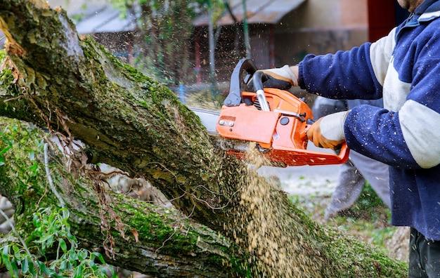 Man die boomtakken snoeit, werkt in de stadsbedrijven na een orkaanstorm schade aan bomen na een storm