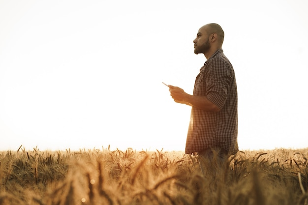 Man die smartphone gebruikt terwijl hij in een tarweveld staat bij zonsondergang