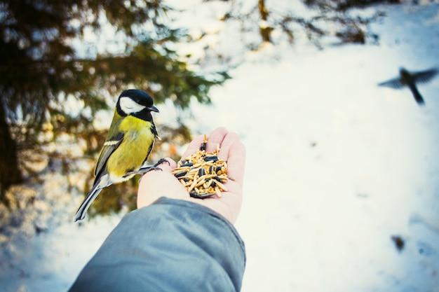 Man die vogels voedt met zijn handen in het park in de winter
