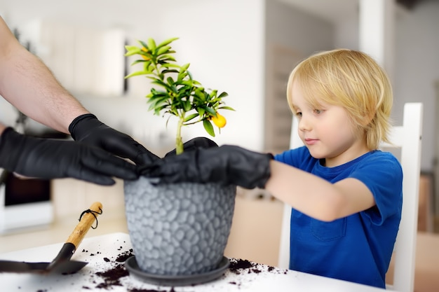 Man en kleine jongen die kamerplant calamondin overplanten in een nieuwe grote bloempot