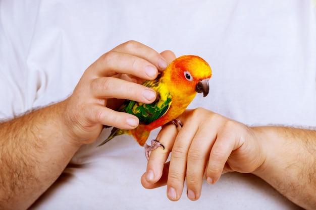 Man genieten van spelen met papegaai in huis genieten van het houden van kleurrijke papegaaien