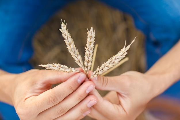 Man hand aanraken van tarwe oren op het veld