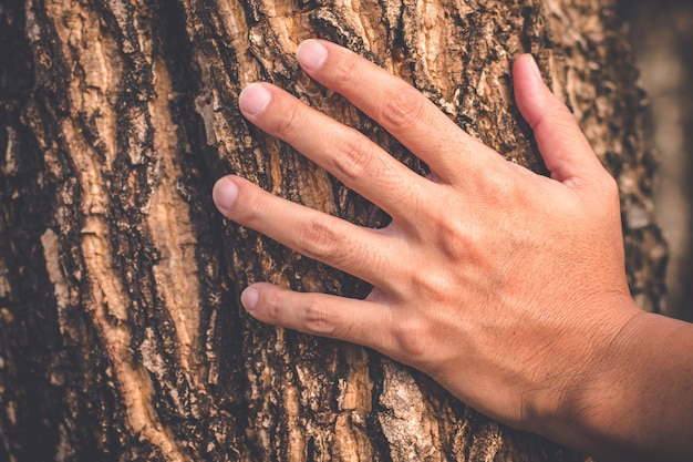 Man hand houd oude boom