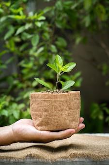 Man hand met groeiende plant zak pot