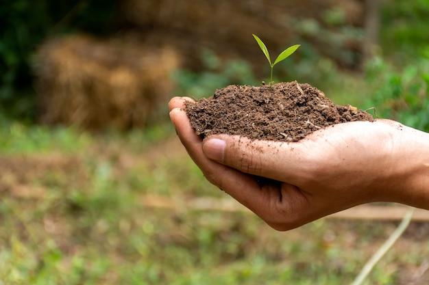 Man hand met overvloed bodem met jonge plant op de achtergrond wazig natuur.
