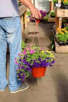 Man heeft een pot kalibrahoa-bloemen in zijn handen, gekocht bij het tuincentrum