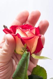 Man houdt een roos in zijn hand.