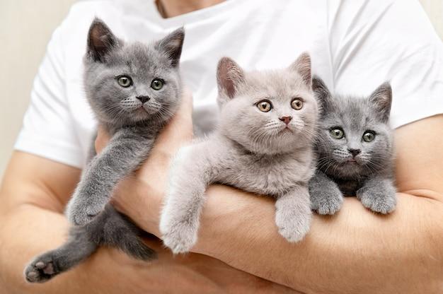 Man houdt meerdere kittens in zijn handen