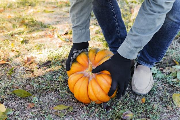 Man in handschoenen houdt gele pompoen in veld herfst oogsttijd pompoen patch