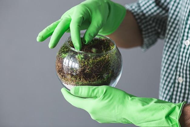 Man in handschoenen met zijn vinger maakt vetplanten recht in een glazen vaas, close-up.