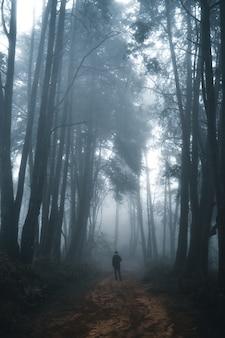 Man in het donkere bos, mist en dennenbos in het tropische woud van de winter, mist en dennen