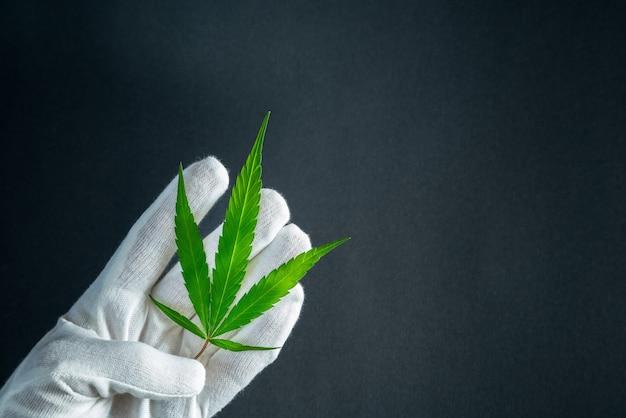 Man in witte handschoenen met cannabisblad.