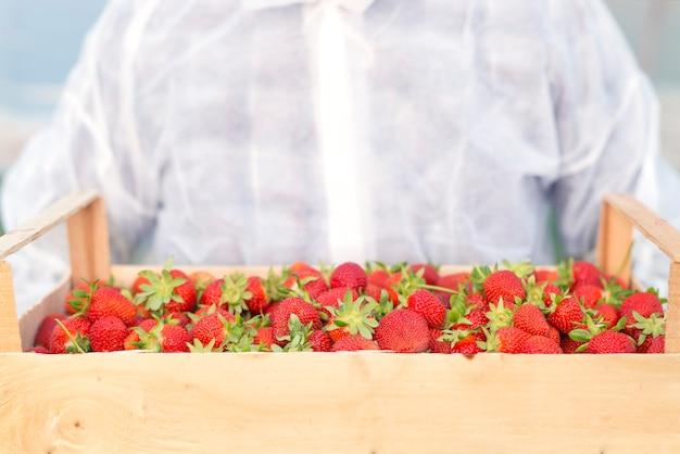 Man met krat vol aardbeien fruit