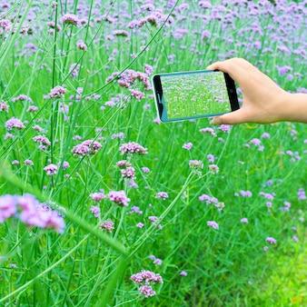 Man met mobiele telefoons om verbena te nemen