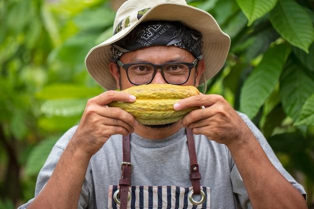 Man nemen bonen uit open cacaopeul