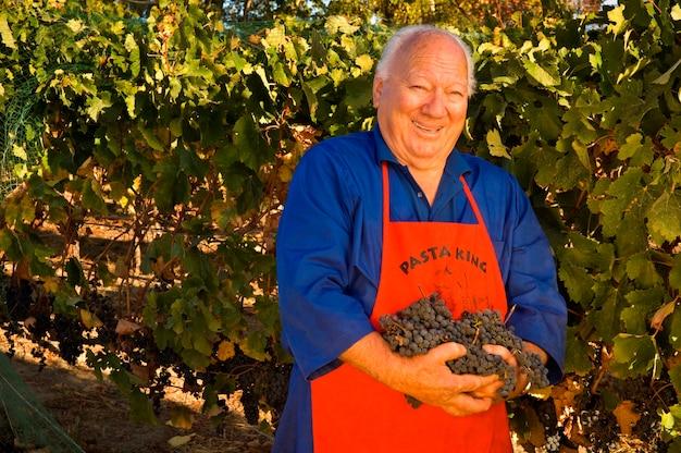Man oogsten van druiven uit de wijngaard