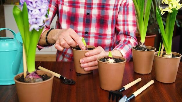 Man plant bloemen in een bloempot hyacinten. selectieve aandacht. mensen