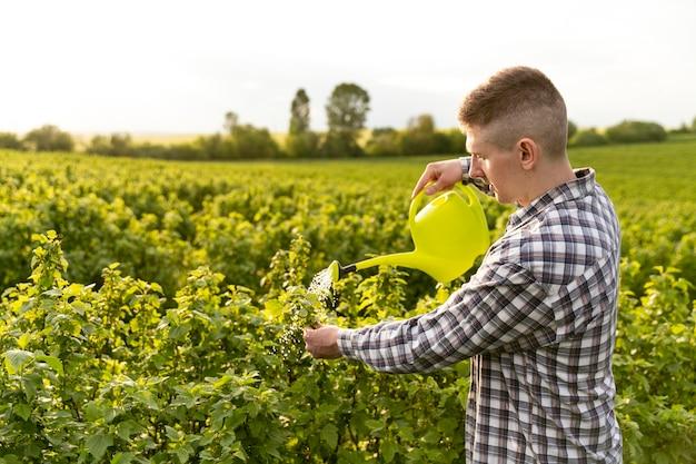 Man planten water geven