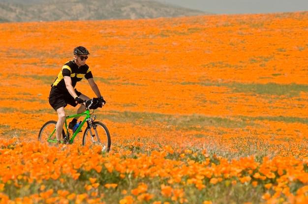 Man rijdt op een fiets door een klaproos veld