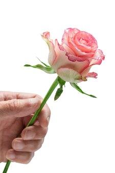 Man's hand met een roze roos