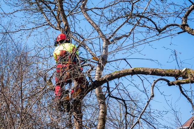 Man snoeit boomtoppen met een zaag, houthakker met beschermende uitrusting en zagen van takken.