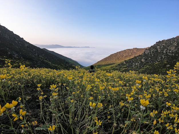 Man zit op bloemenlandschap van een bergachtige vallei
