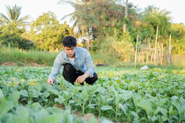 Man zittend op de grond en het plukken of controleren van groenten in de tuin in het oogstseizoen