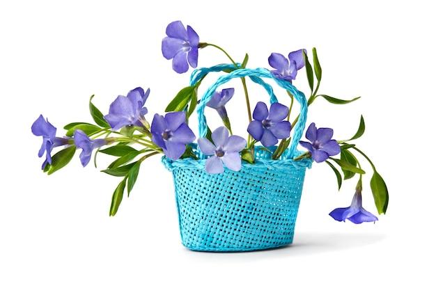 Mand met blauwe bloemen maagdenpalm