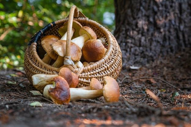 Mand met boletus edulis-paddenstoelen in het bos in de herfst