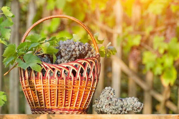 Mand met druiven op de haagachtergrond. zonlicht