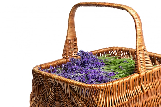 Mand met een lavendel, geïsoleerd op wit