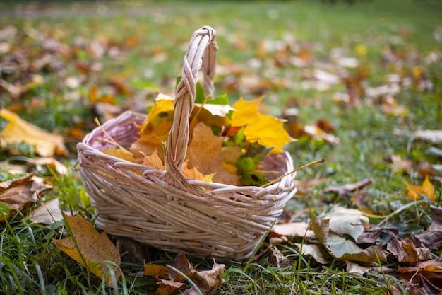 Mand met esdoornbladeren in het herfstbos